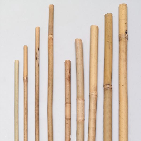 Bambus Pflanzstab Tonkinstab Bambusrohr 120 - 180cm